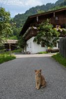 Katze Haus